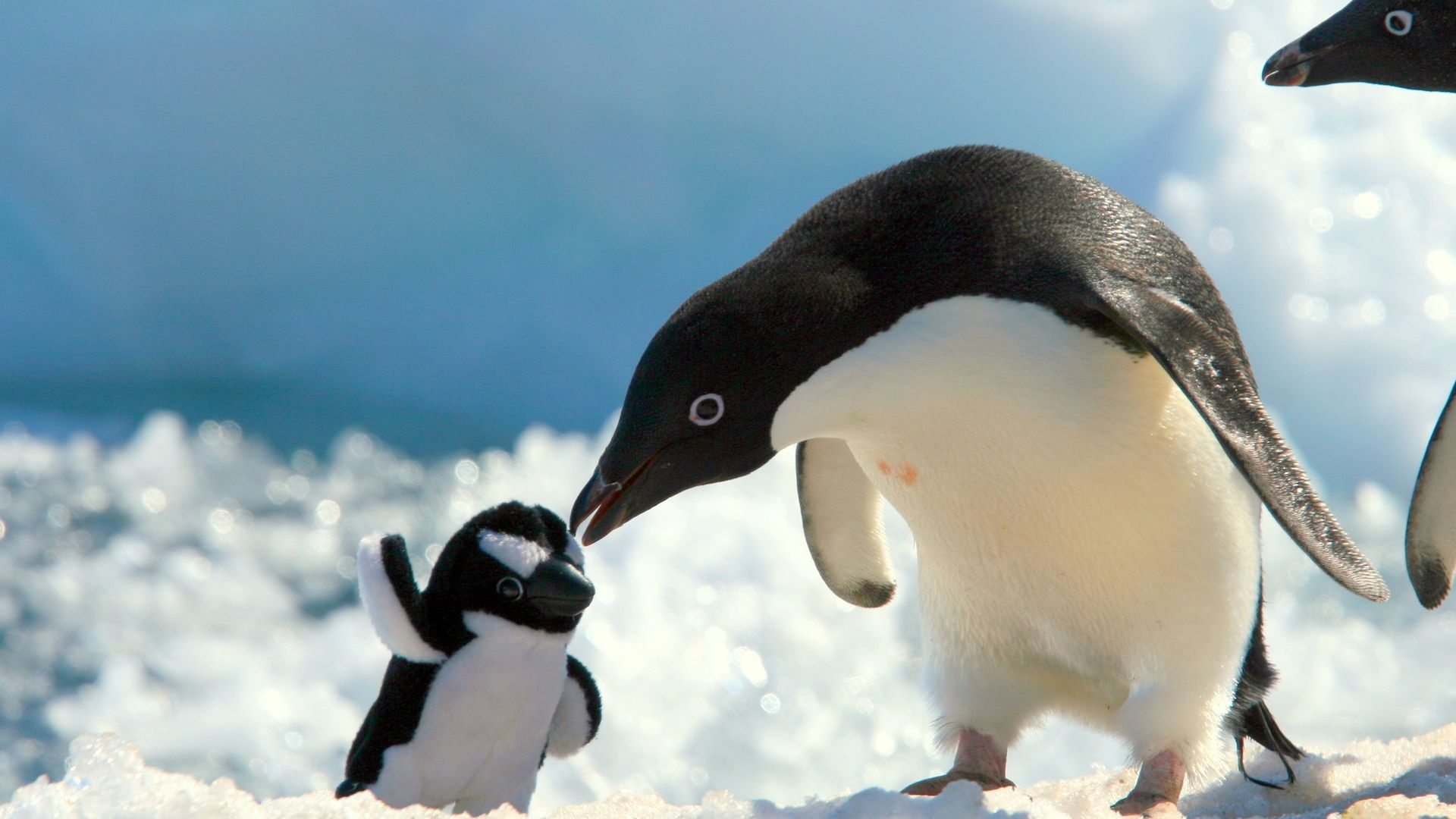 Penguin Baby Love Wallpaper   Wallpaper Stream 1920x1080