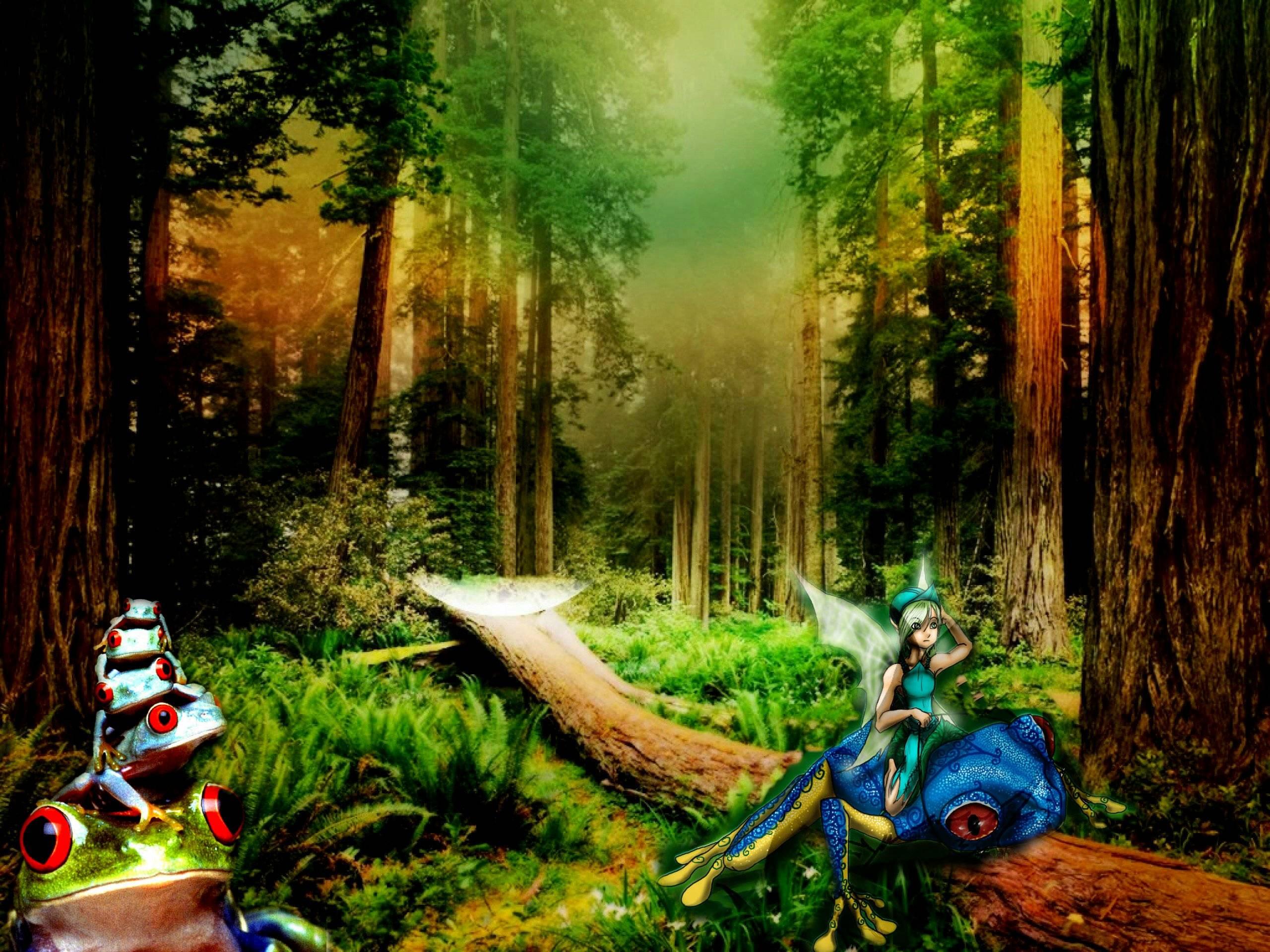 enchanted forest wallpapers wallpapersafari