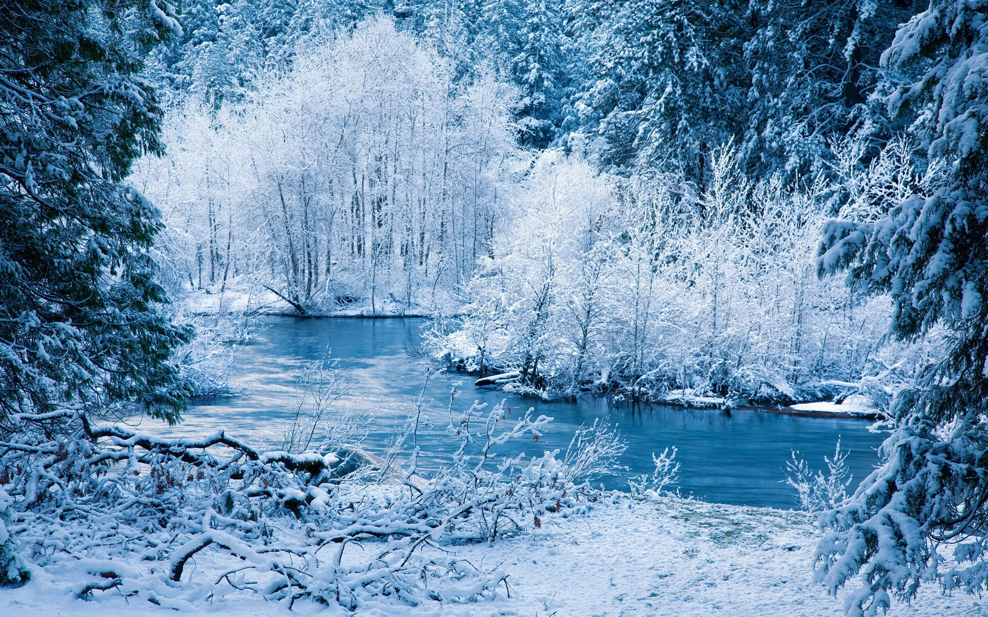 Winter Forest Desktop Wallpaper Wallpapersafari