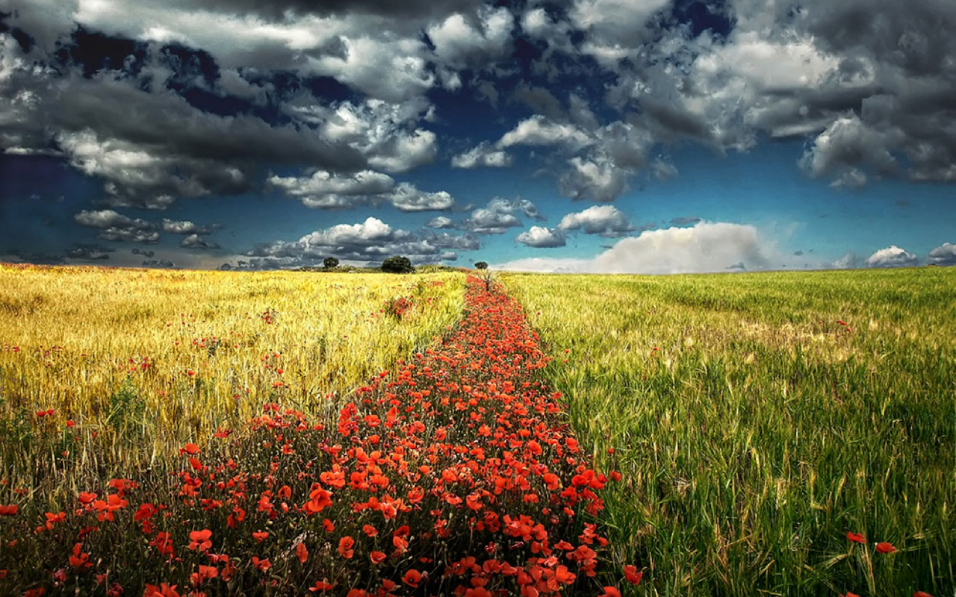 car wallpapers motors wallpapers sports wallpapers field of poppies 1920x1200