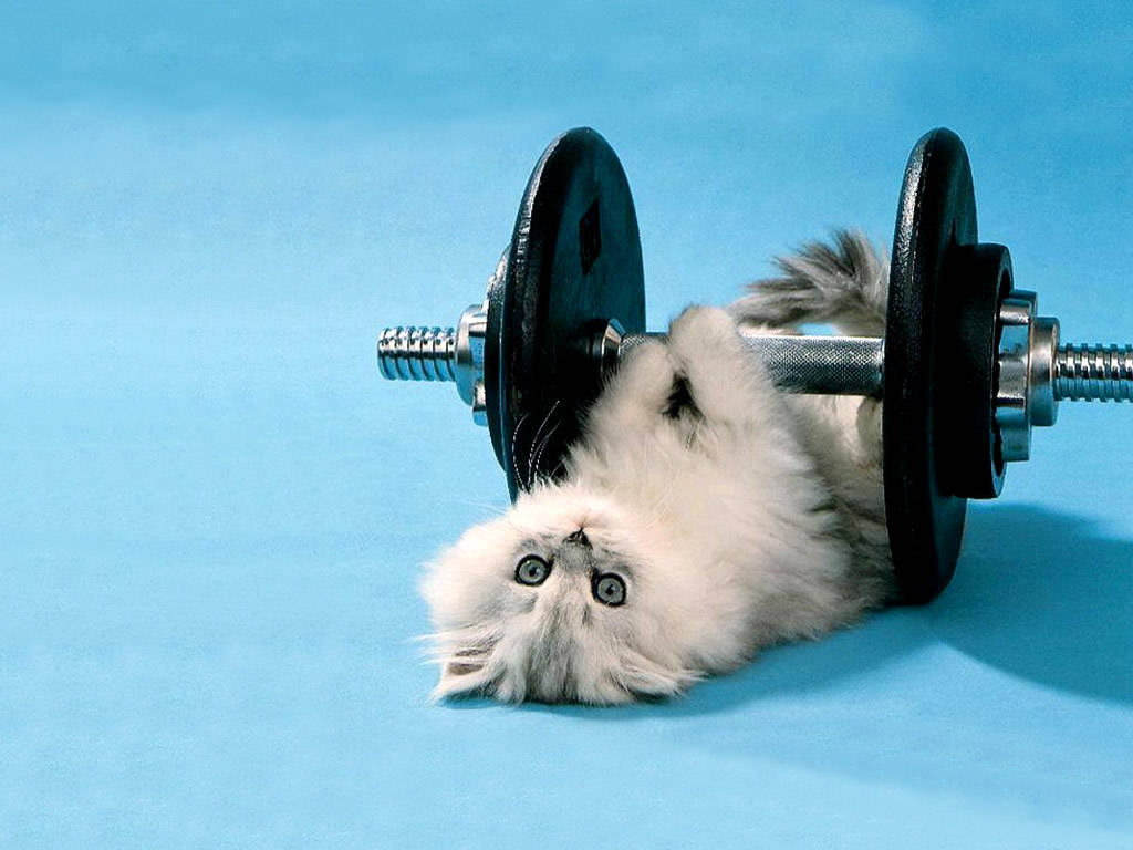 Funny Animals Wallpapers For Desktop 2011 Funny World 1024x768