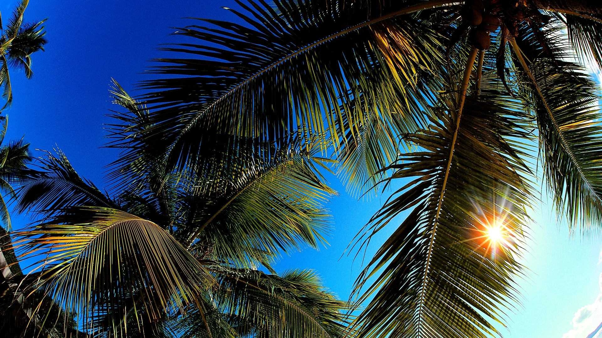 File Name Palm Leaf Wallpaper 1920x1080