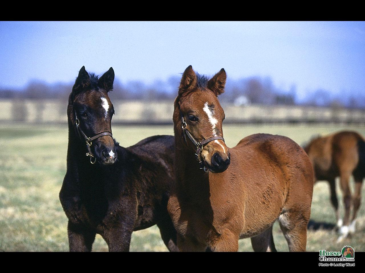 Springtime Foal Screensaver and Desktop Wallpapers 1280x960