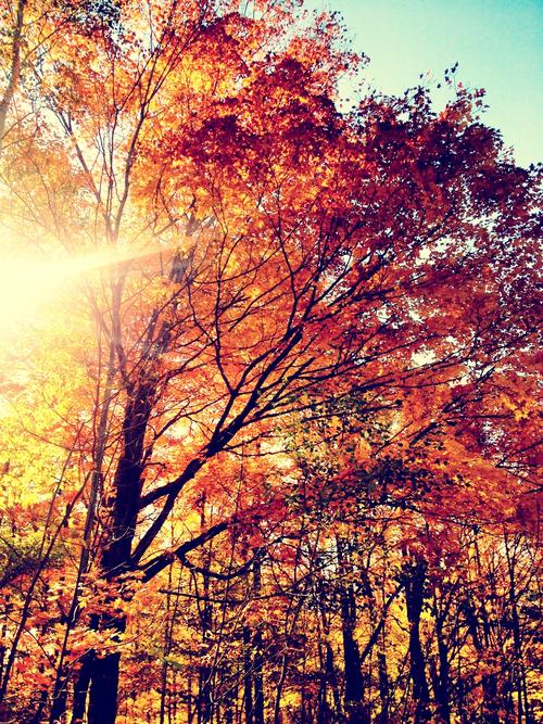 autumn colours Tumblr 500x667
