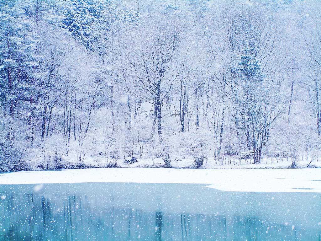 Download Snowy Wallpapers wallpaper winter wallpaper 1024x768