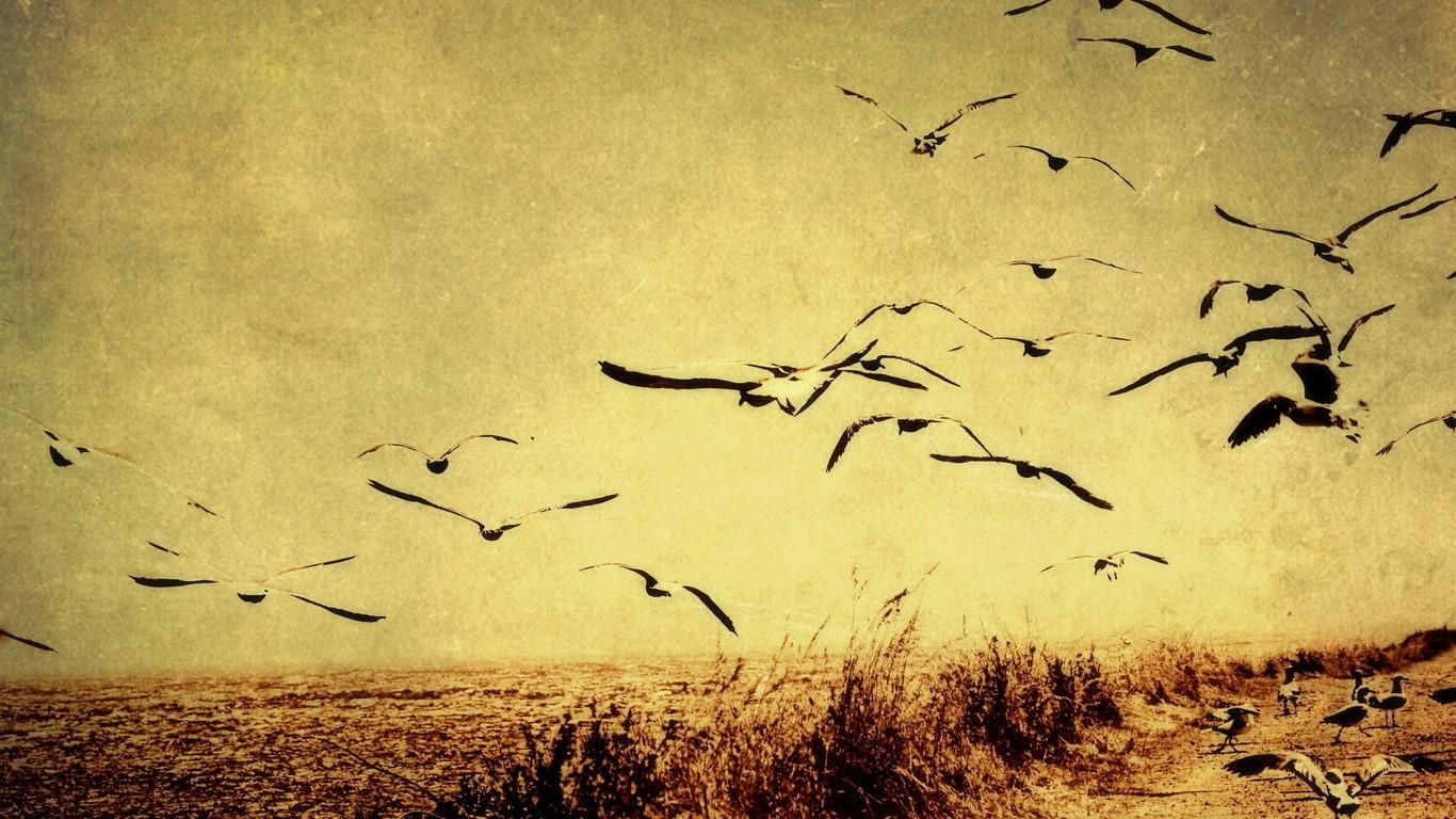 download vintage bird wallpaper which is under the birds wallpapers 1366x768
