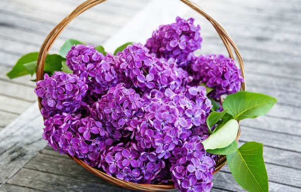 Wallpaper lilac flowers purple spring basket lilac wallpapers 596x380