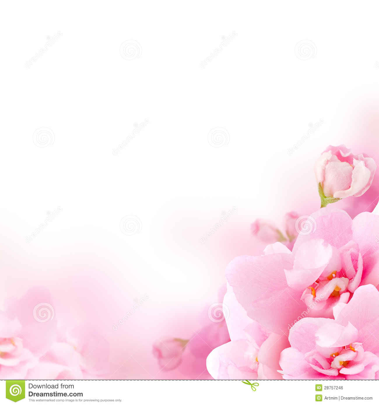 Free Download Background White Background Pink Flowers Background