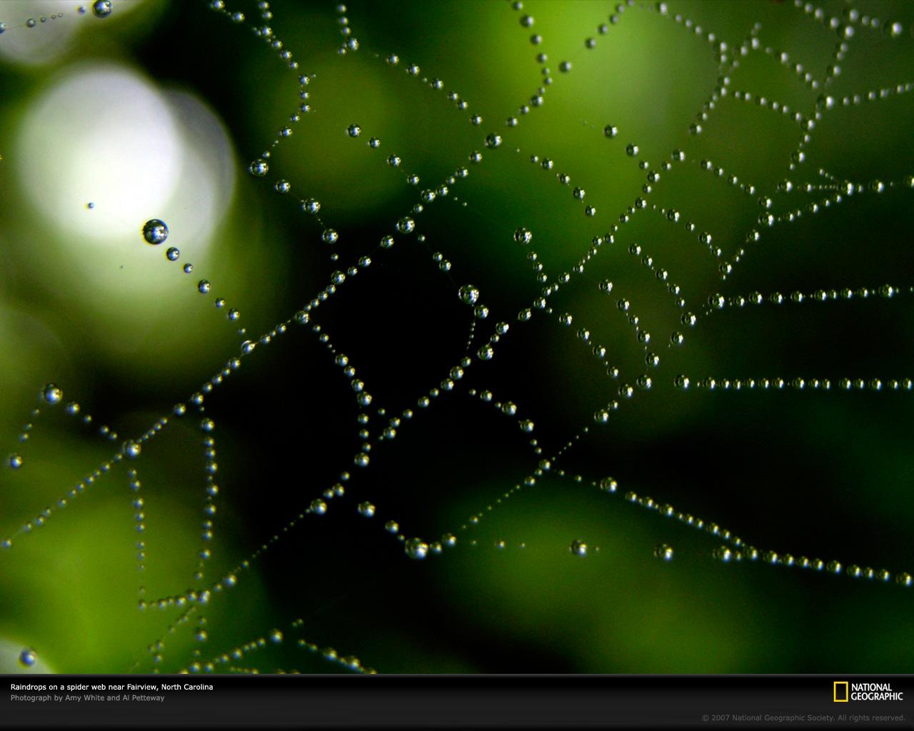 Spider Web Wallpaper Download