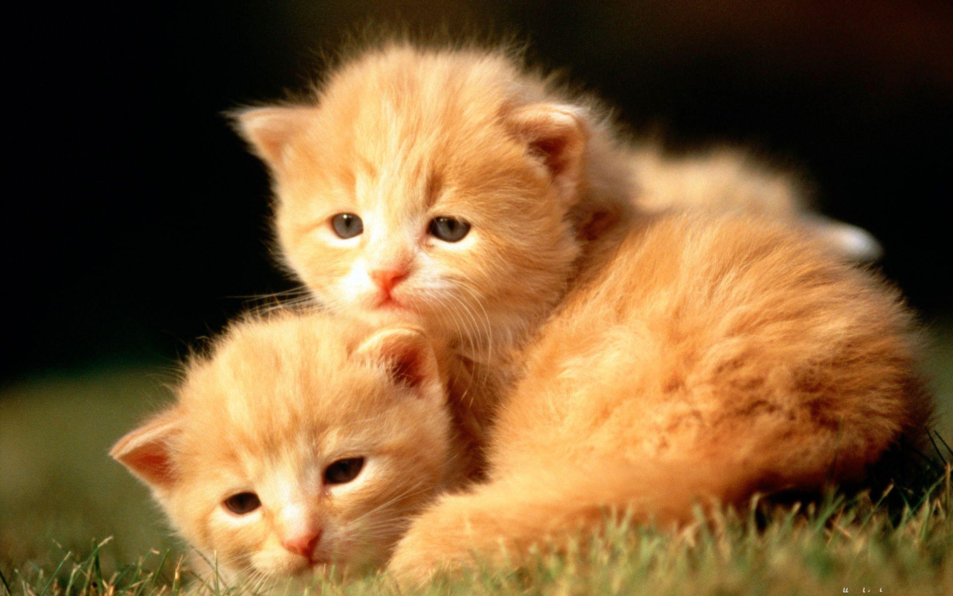 Cute Baby Animal Wallpapers 1920x1200