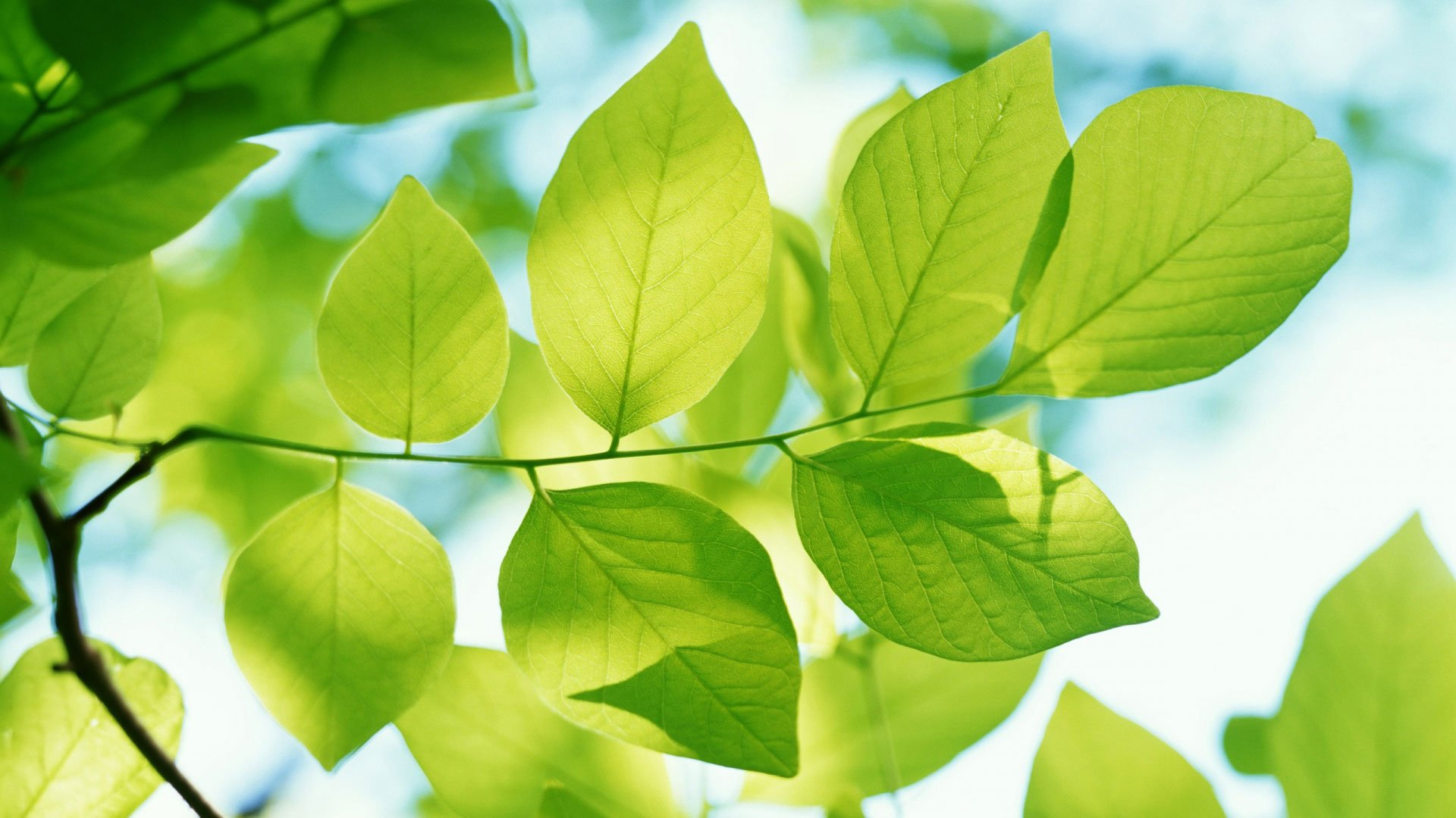 leaves green wallpaper autumn wallpapers walls 1920x1080 1920x1080