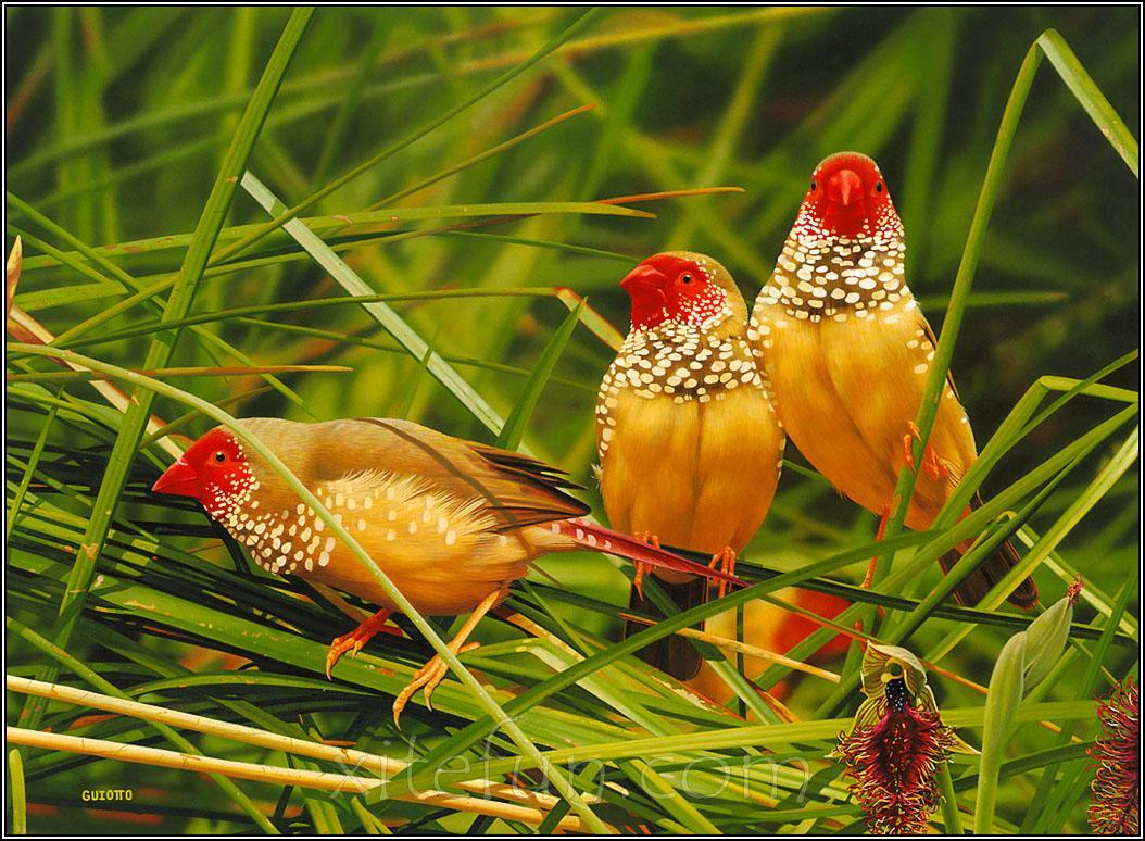 Beautiful Birds Wallpapers 1054x774