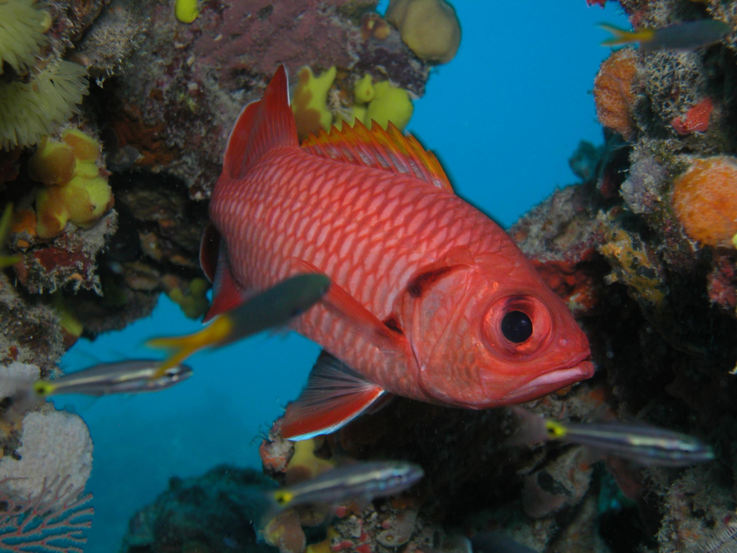 Reef Fish Wallpaper - WallpaperSafari