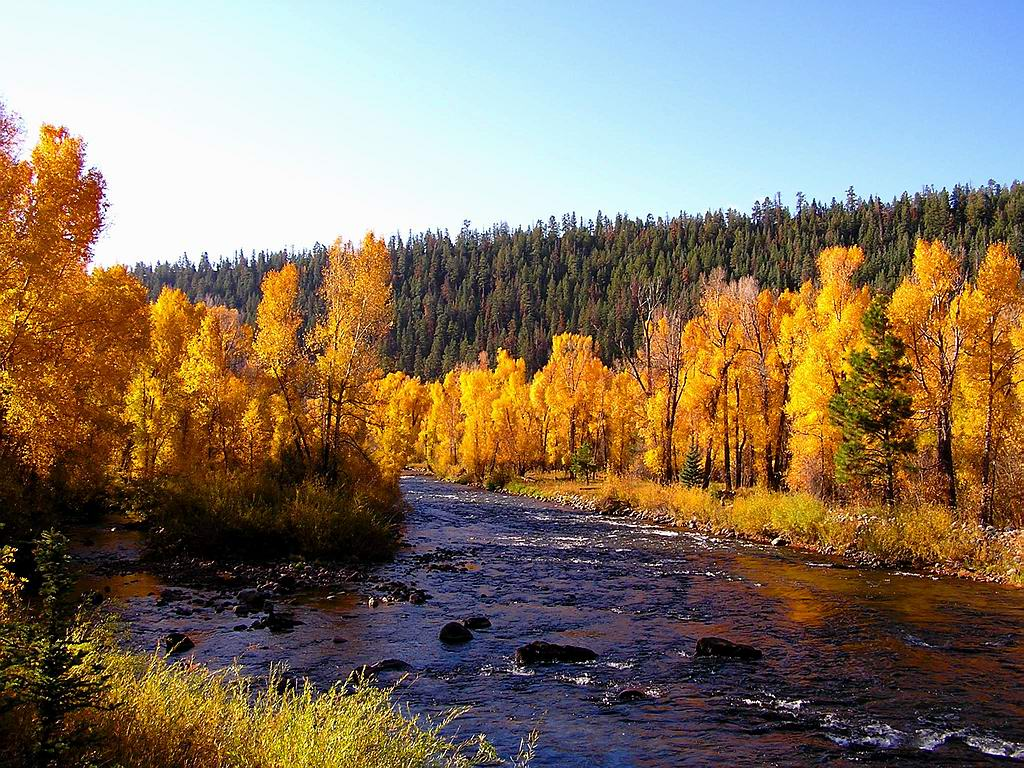 Autumn River Background Photos Pictures Collections   Desktop 1024x768