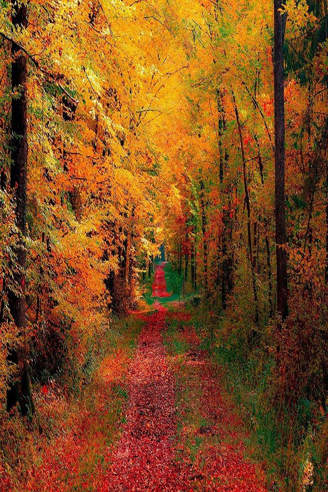 Autumn Woods and Road Daily iPhone 654 Wallpapers Pinterest 640x960