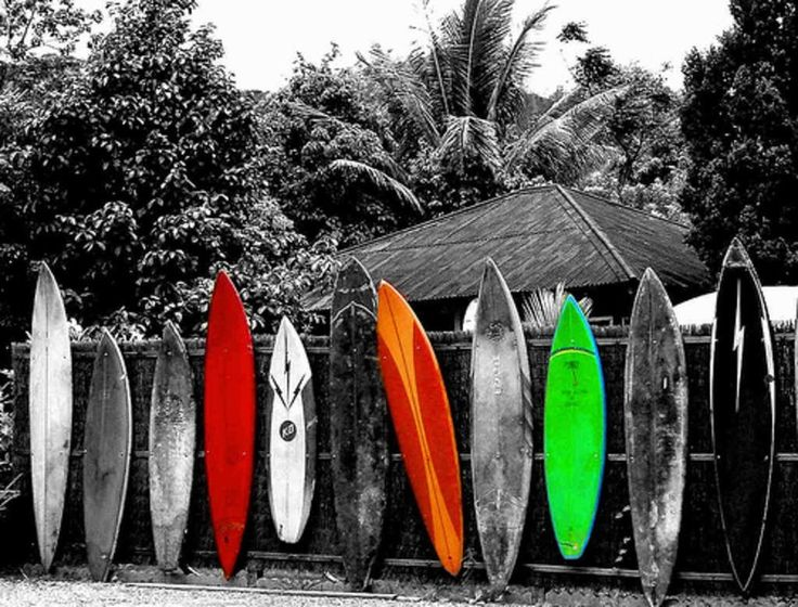Surfing Surfing Wallpapers and Surfing Backgrounds 1 of 1 Surf 736x560