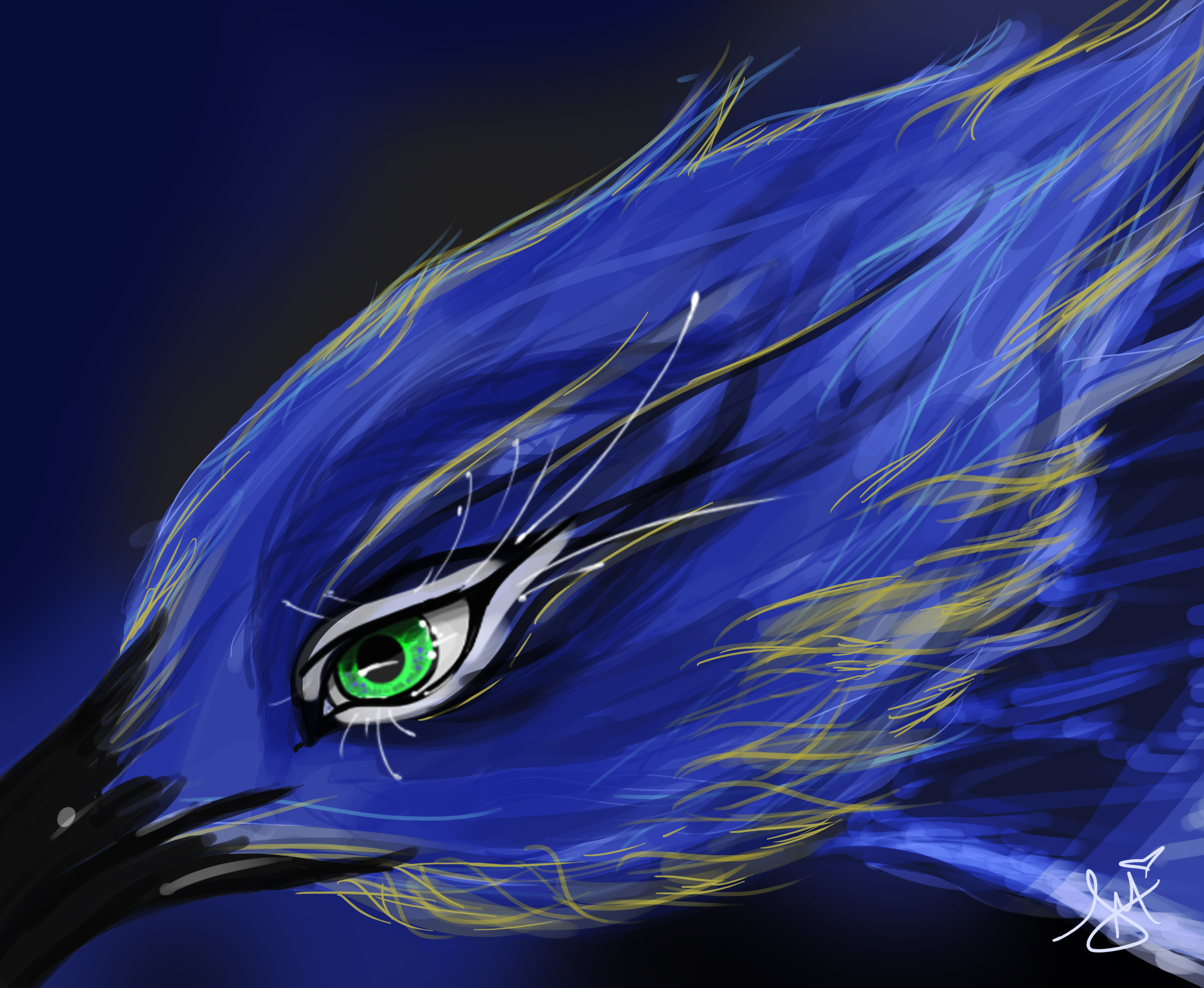 Download Blue Jay By Toxicunique Dcj Wallpaper Full HD Wallpapers 2837x2329