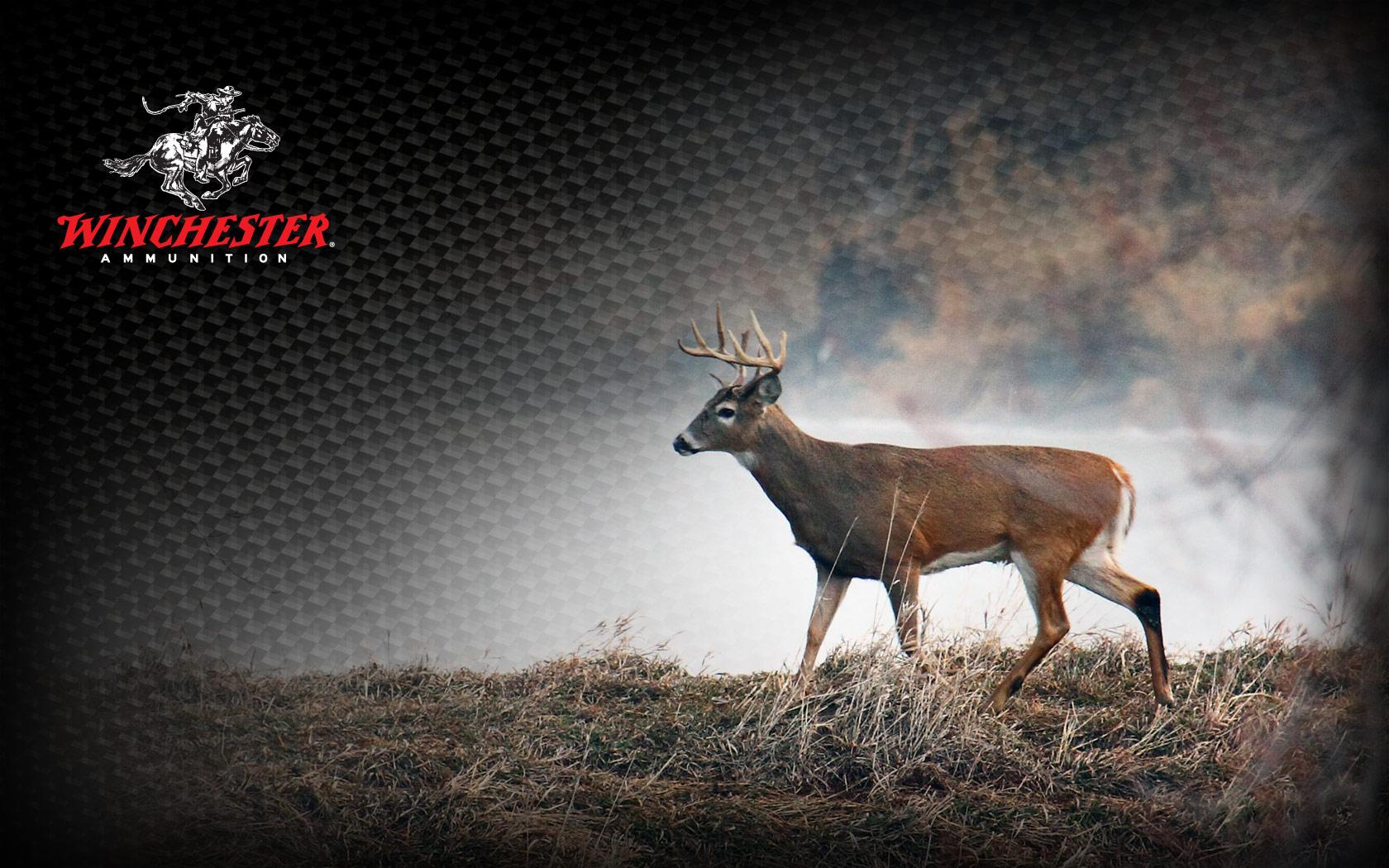 1680x1050 deer1 1680x1050