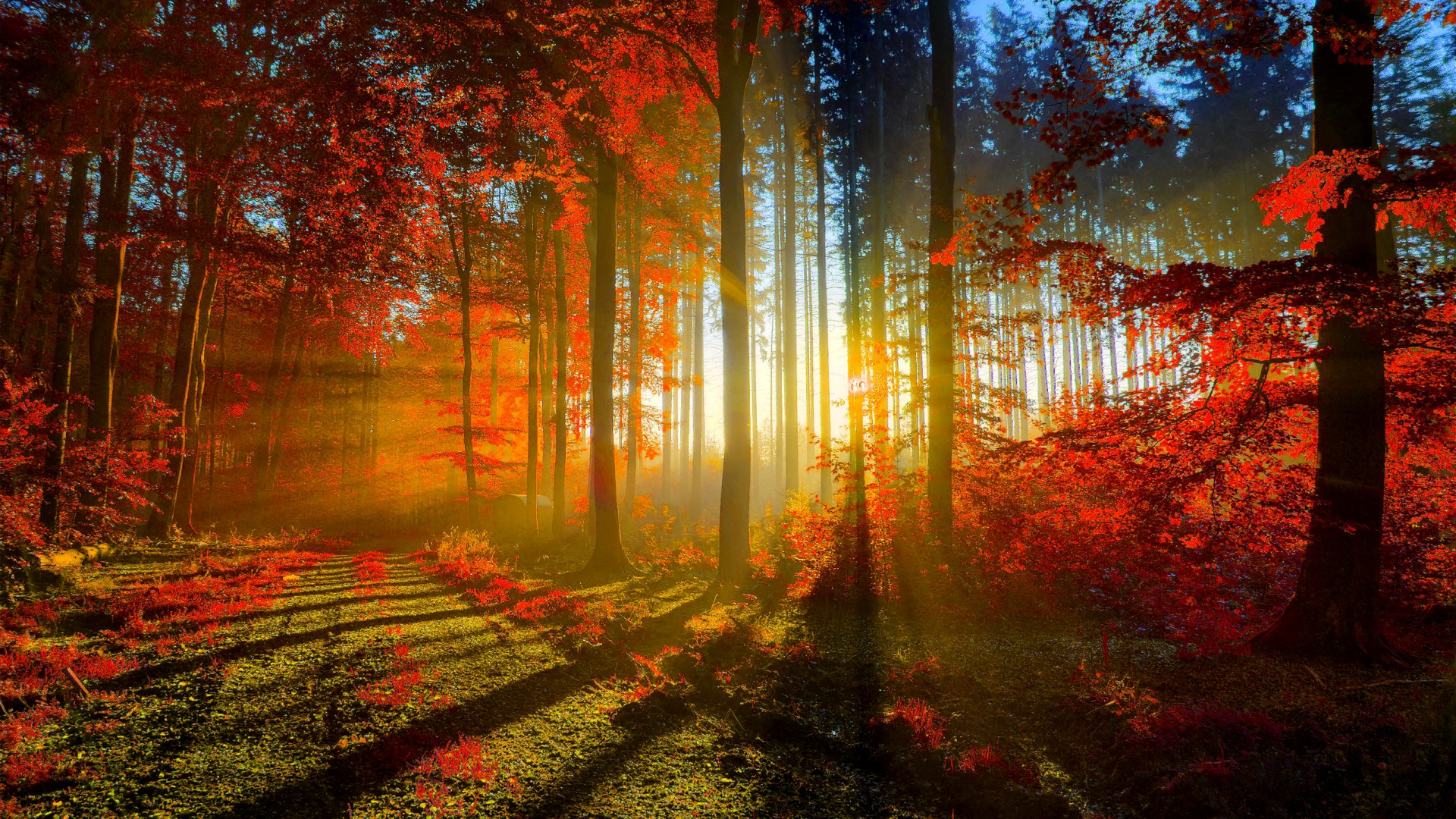 HD Autumn   HDWPlan 1920x1080