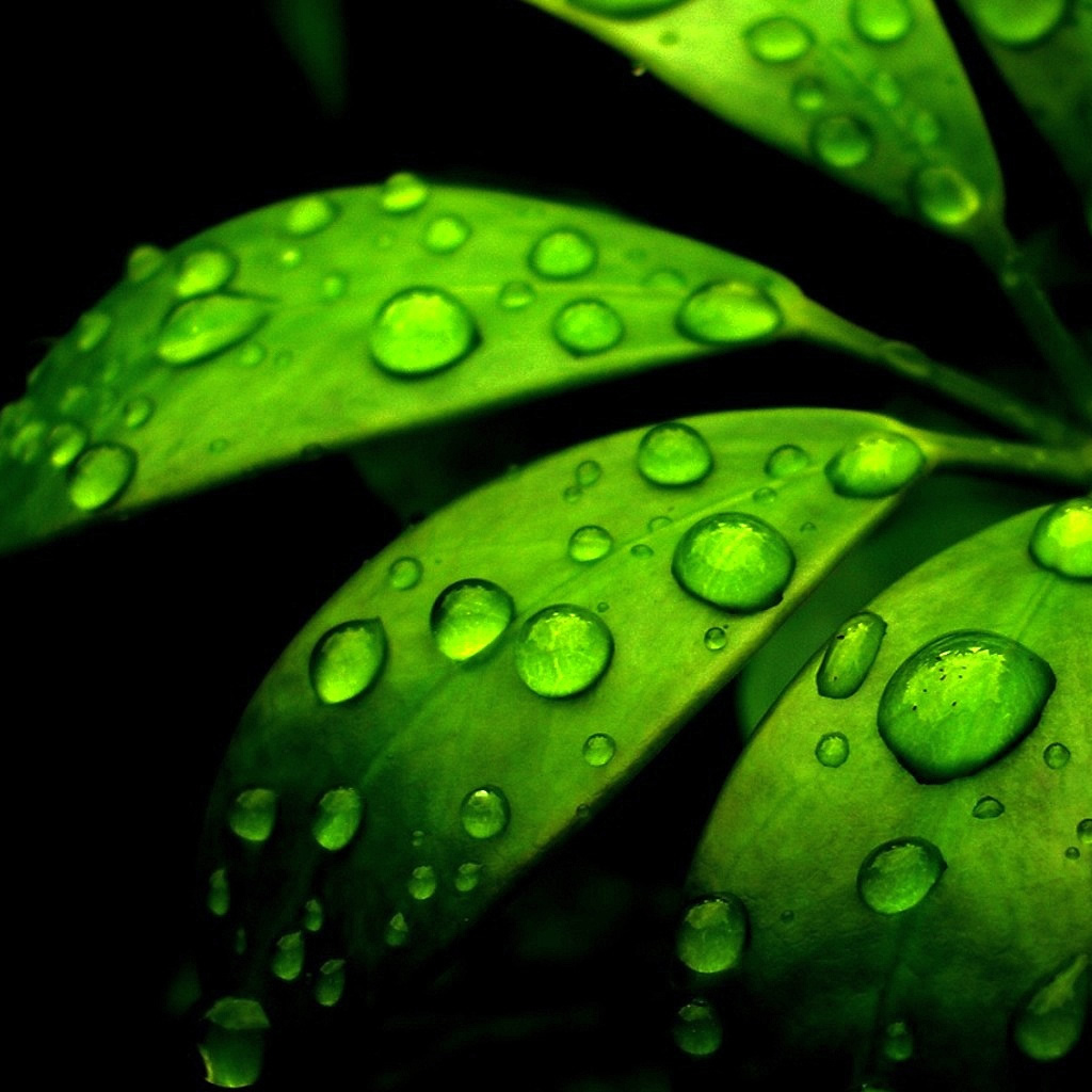 Green Flower iPad Wallpaper Download iPhone Wallpapers iPad 1024x1024
