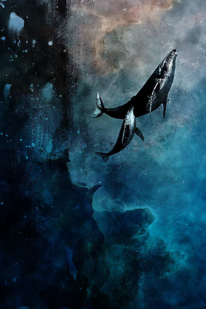 Flying Whales by axcy 700x1050