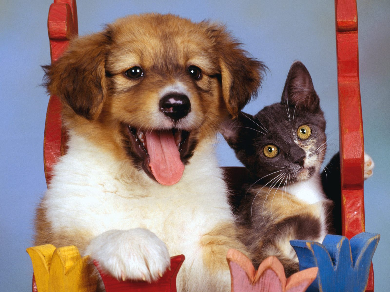 Dogs and Cats Backgrounds Wallpaper and make this wallpaper for your 1600x1200