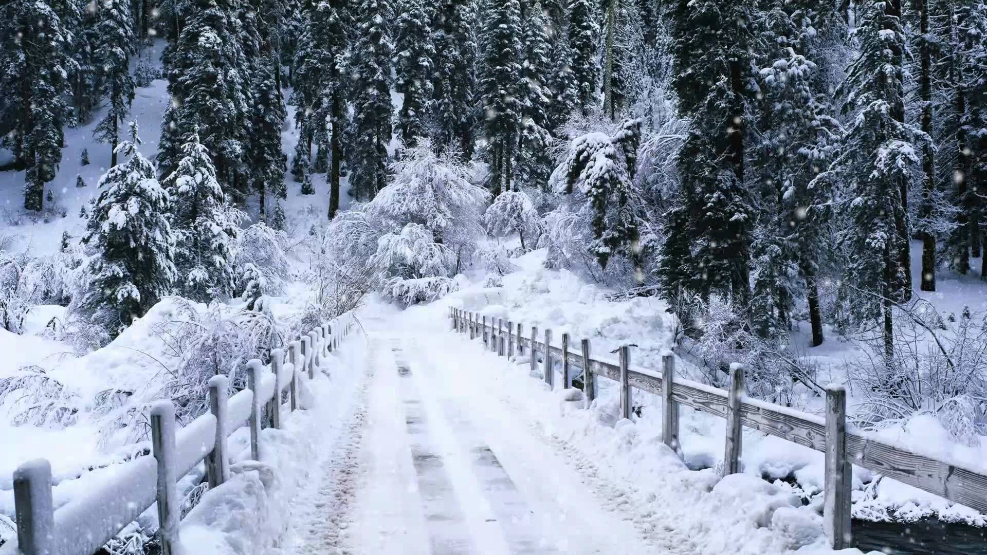 Snow Falling Windows 7 Video Background DreamScene Adobe after 1920x1080