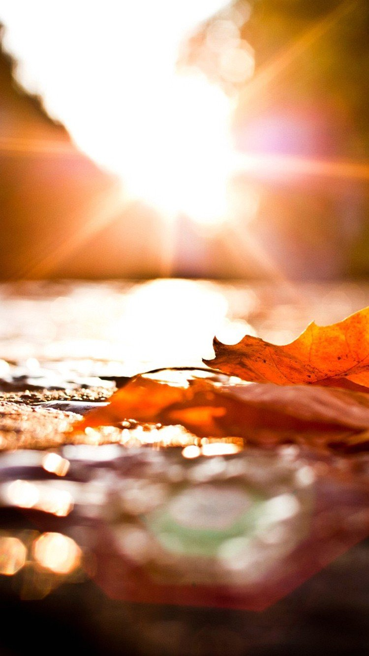 50 Iphone 6 Autumn Wallpaper On Wallpapersafari
