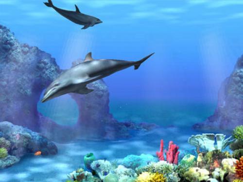 3D Dolphin 500x375