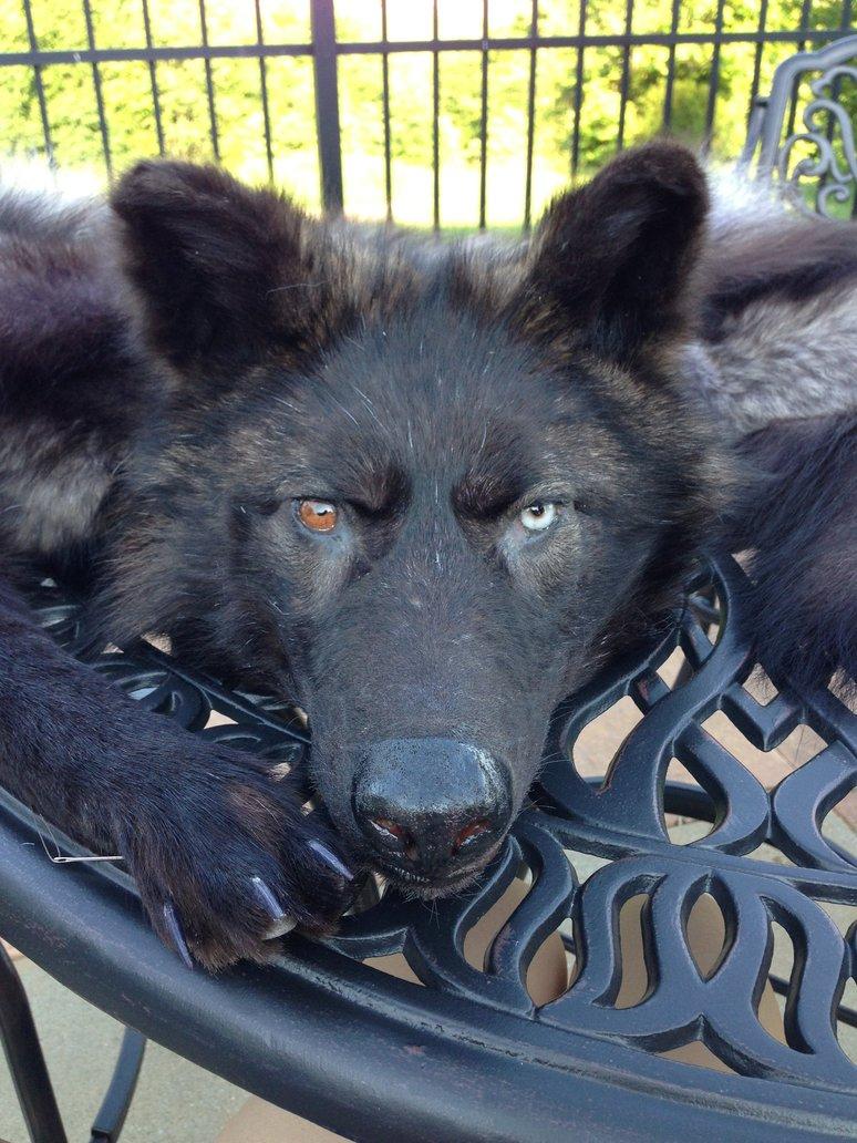 Badass Wolf WIP by x3TheBrokenArtistx3 774x1032
