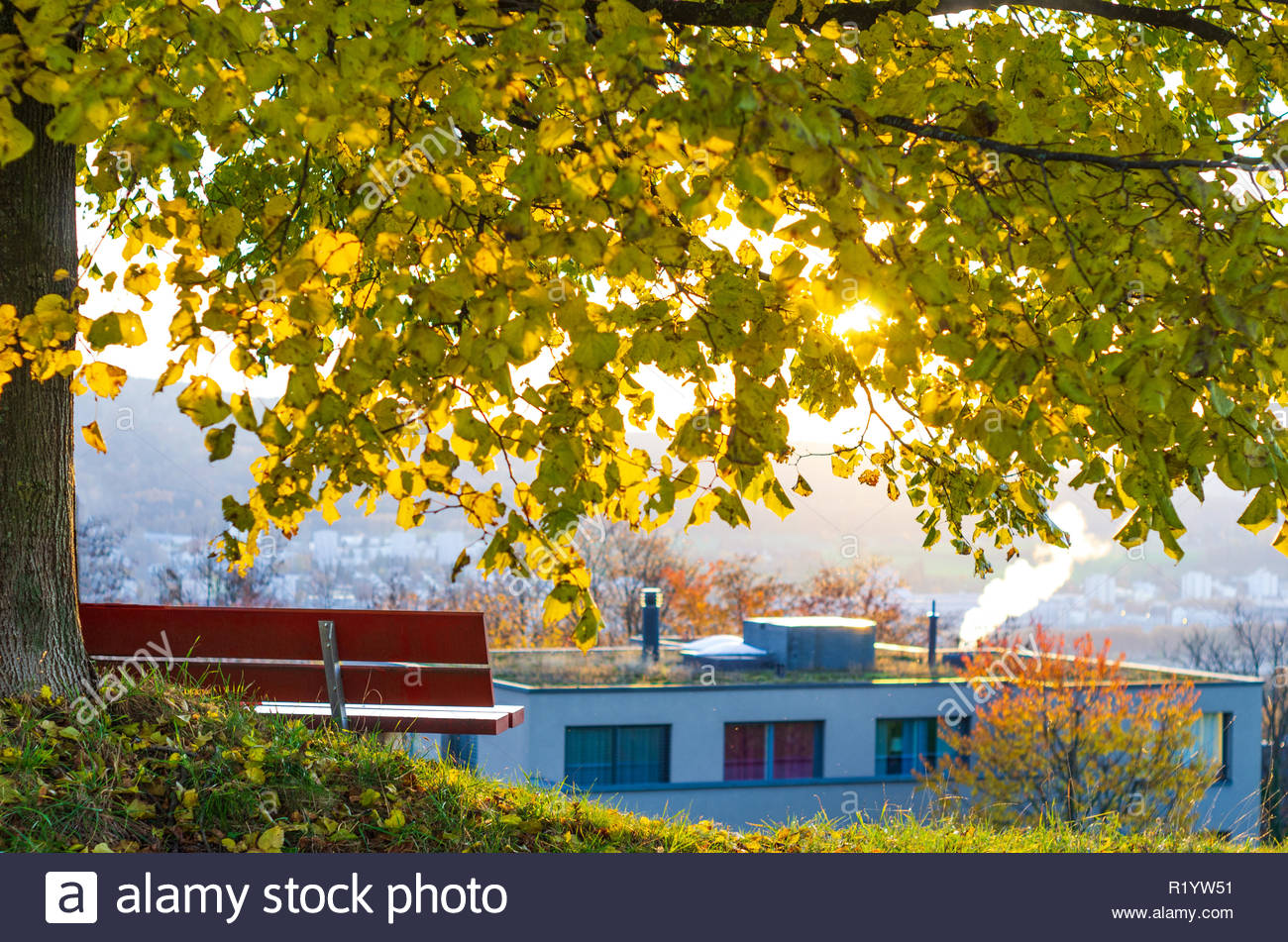 Bench under a tree in autumn backlit city vista in the background 1300x951