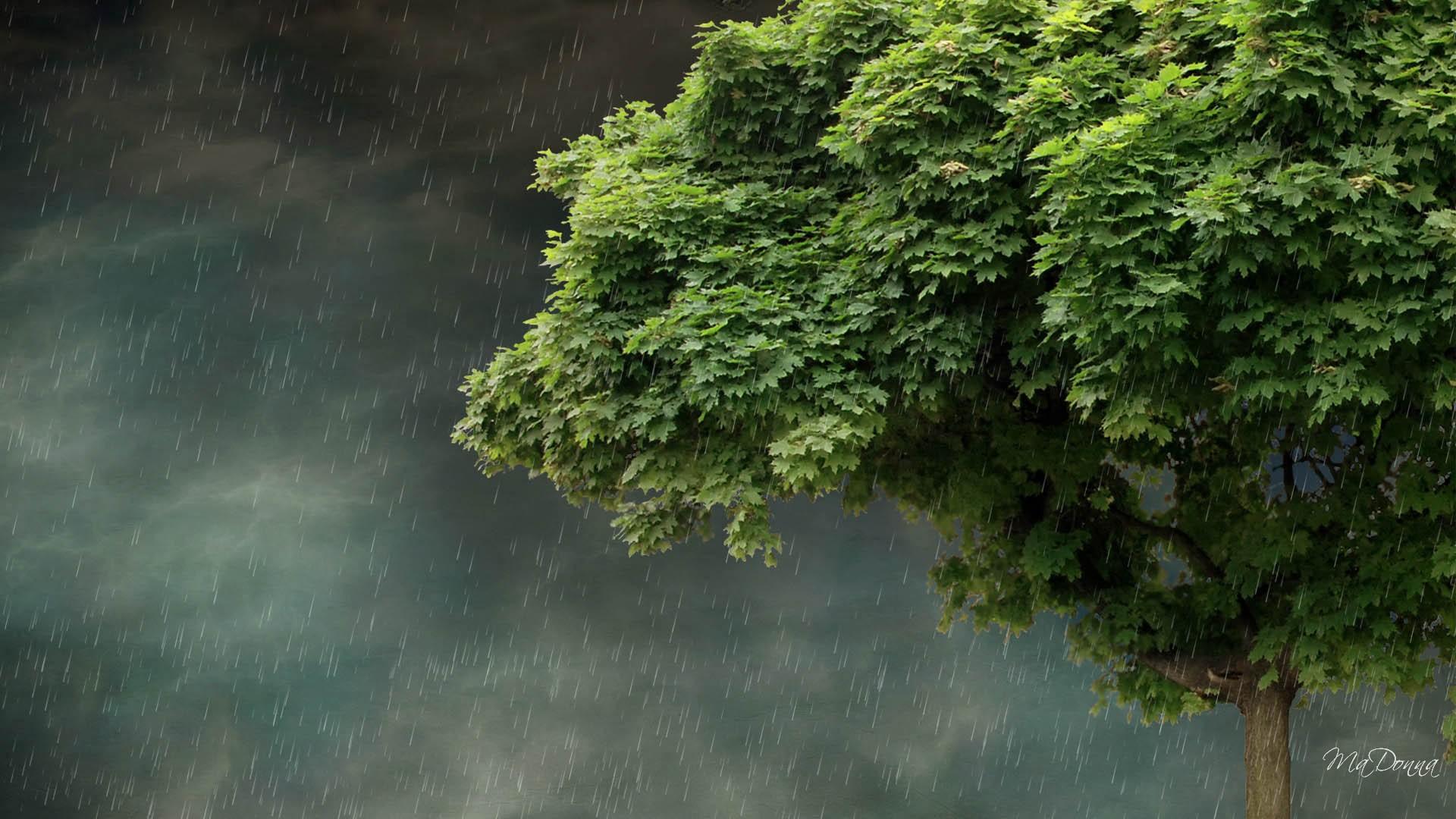 Spring Rain Wallpaper For Desktop Wallpapersafari