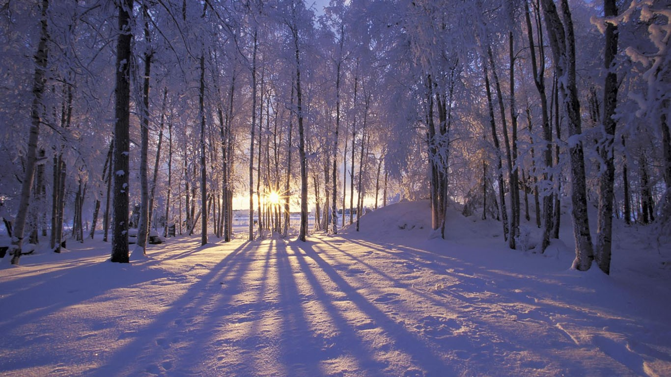 Download Snow Trees Wallpaper 1366x768 Wallpoper 420850 1366x768