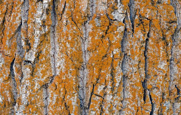 Wallpaper tree trunk bark wallpapers textures   download 596x380