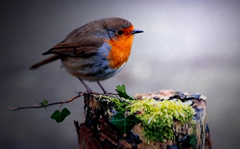 Cute Circle Bird Wallpaper Download Wallpaper WallpaperLepi 1440x900