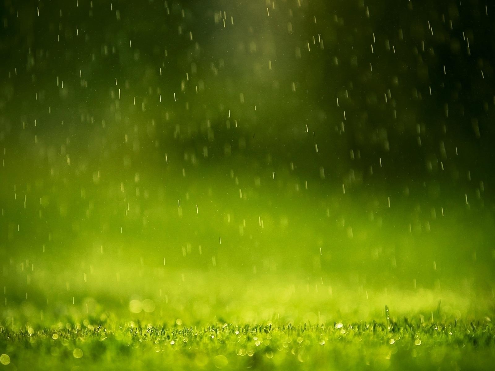 Raining on Grass Macro Photography HD Wallpaper HD Nature Wallpapers 1600x1200