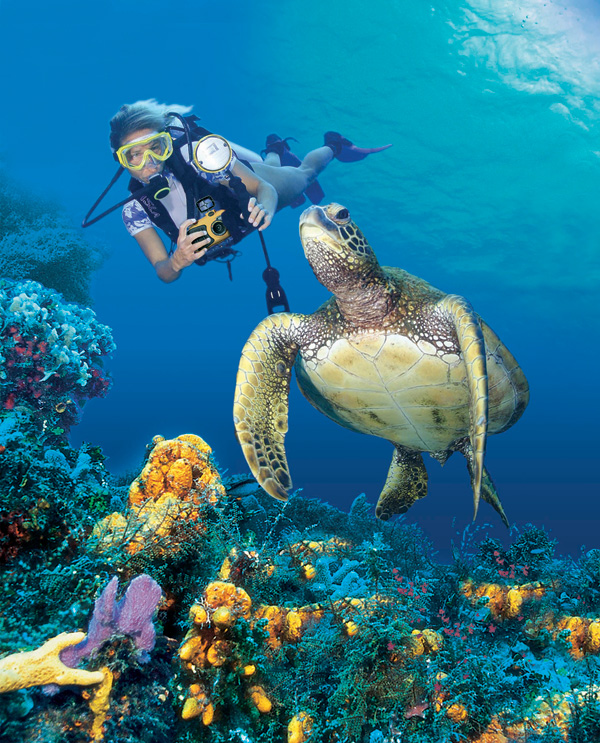 Sea Turtle HD Wallpaper