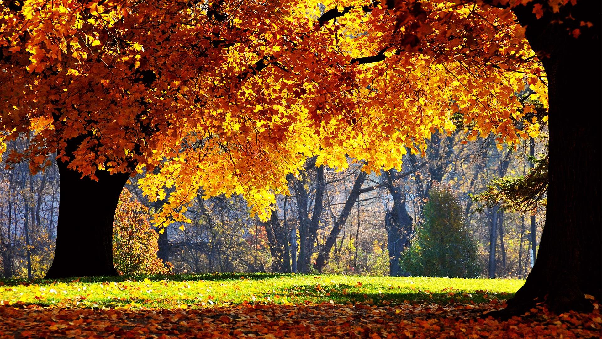 Autumn Wallpaper HD Desktop Wallpaper 1920x1080 41 1920x1080