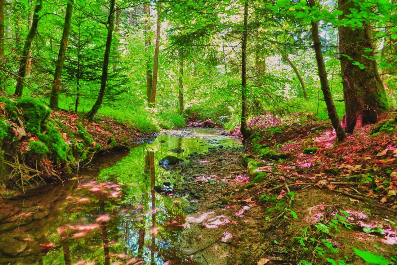 beautiful spring forest wallpaper amazing wallpapers