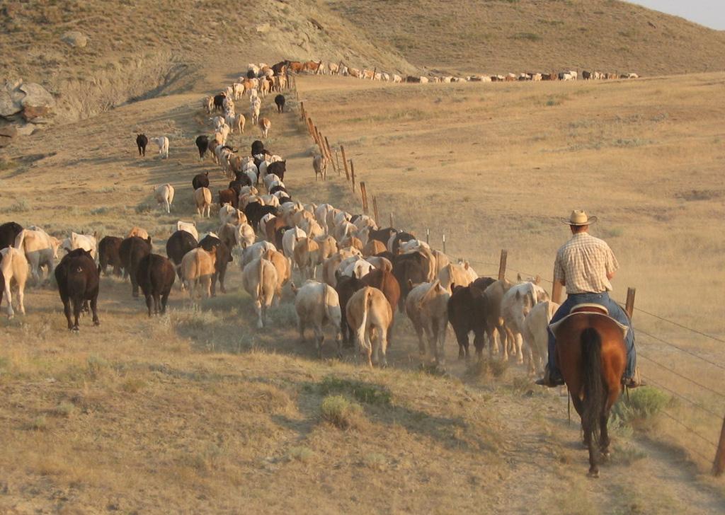 Western Cowboys Wallpaper