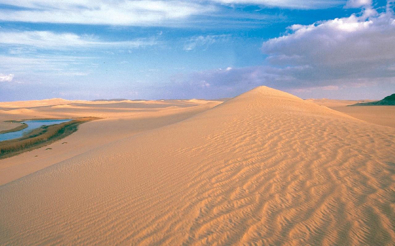 Sonoran Desert Arizona   HD Wallpapers Widescreen   1280x800 1280x800