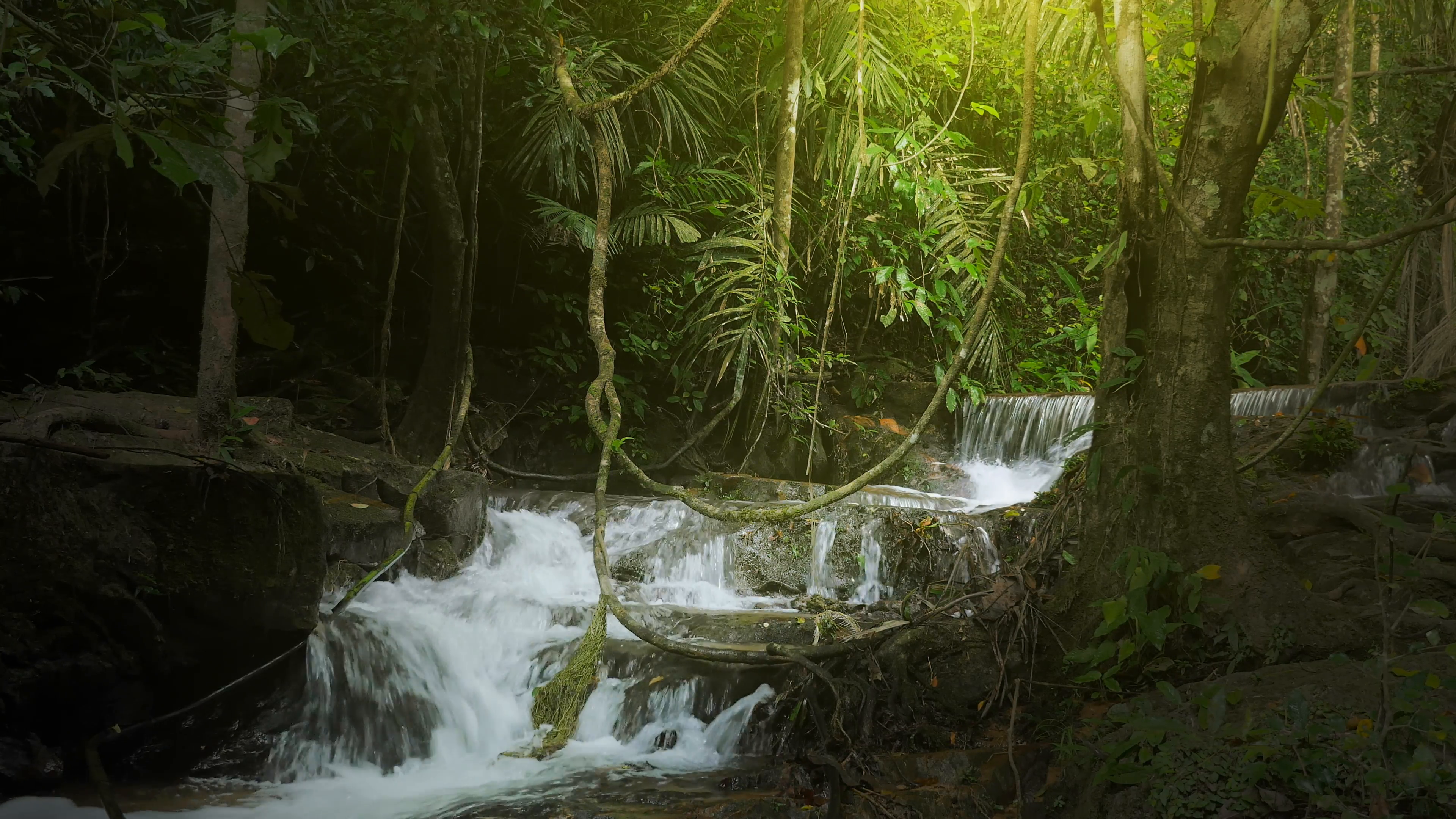Jungle rainforest background with green plants vegetation and 3840x2160