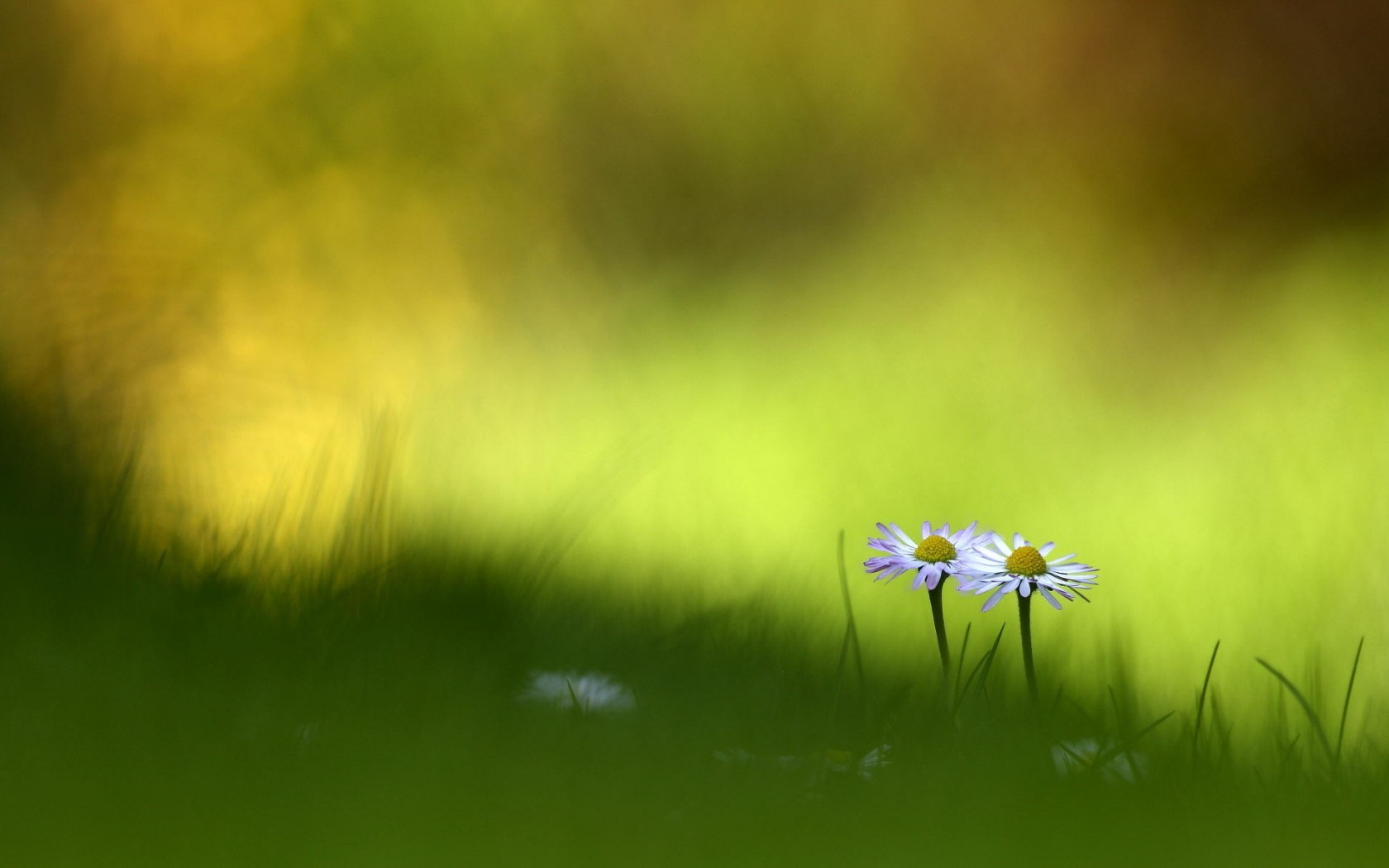 small green flowers beautiful macro photography wallpaper 1680x1050