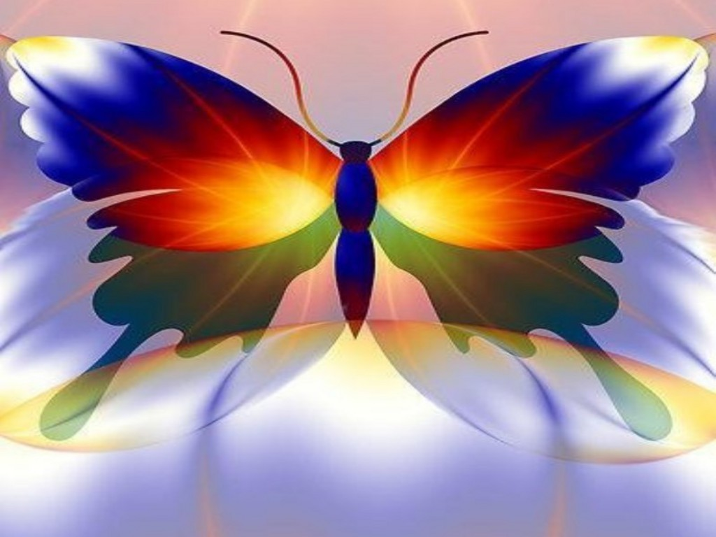 Colorful butterfly backgrounds   SF Wallpaper 1024x768