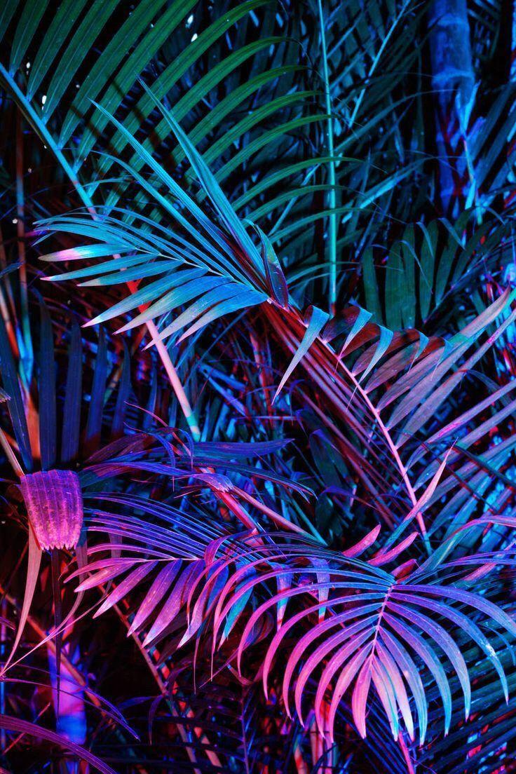 Neon plants Backgrounds Neon aesthetic Supreme wallpaper 736x1104