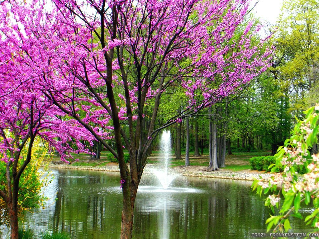 35 Beautiful Spring Pictures And Wallpapers: Free Beautiful Spring Scenic Wallpaper