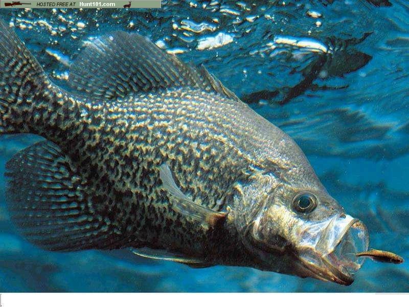 bass fishing desktop wallpaper Desktop Wallpaper 800x600