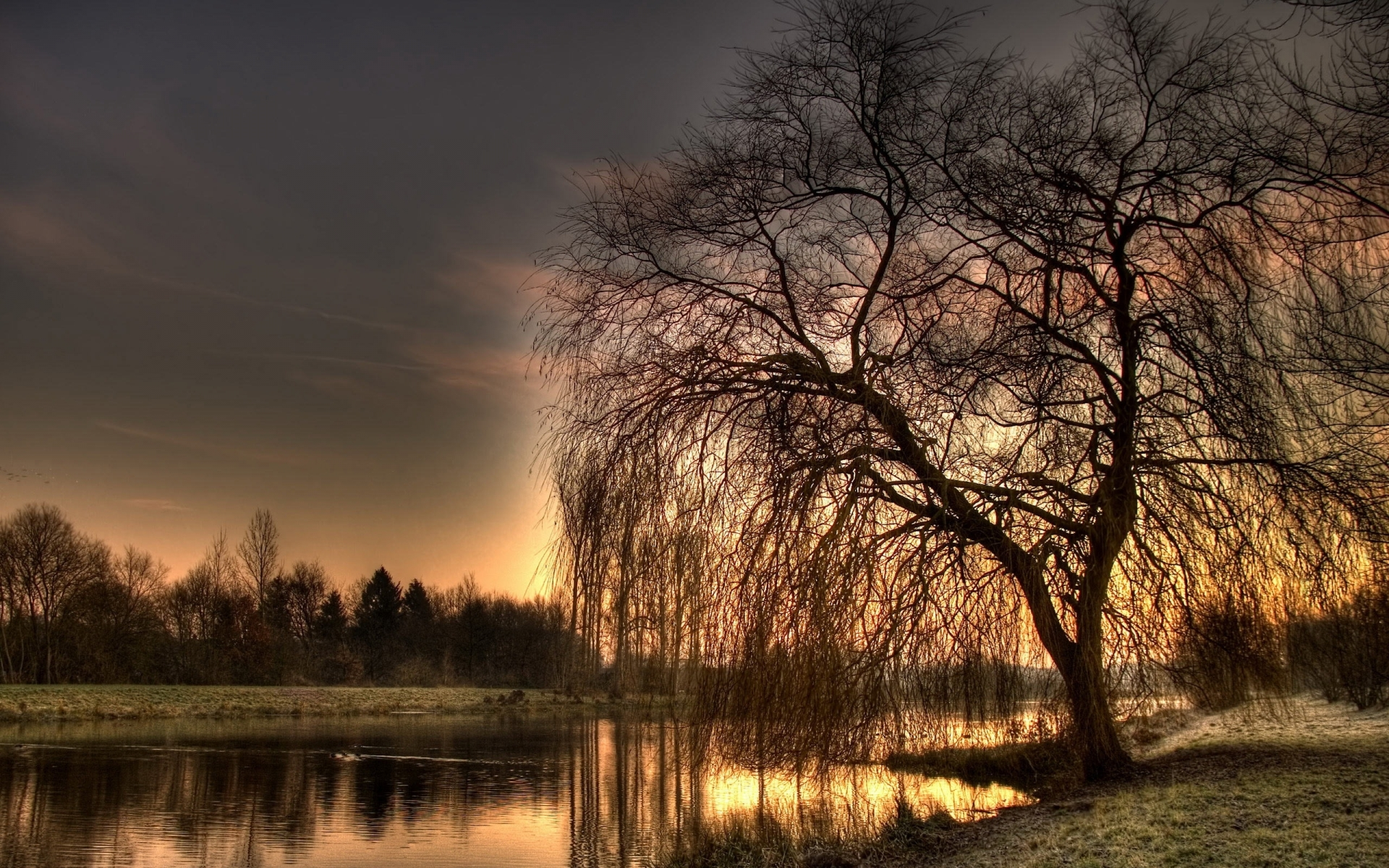 Weeping Willow Tree Background wallpaper   793529 1920x1200