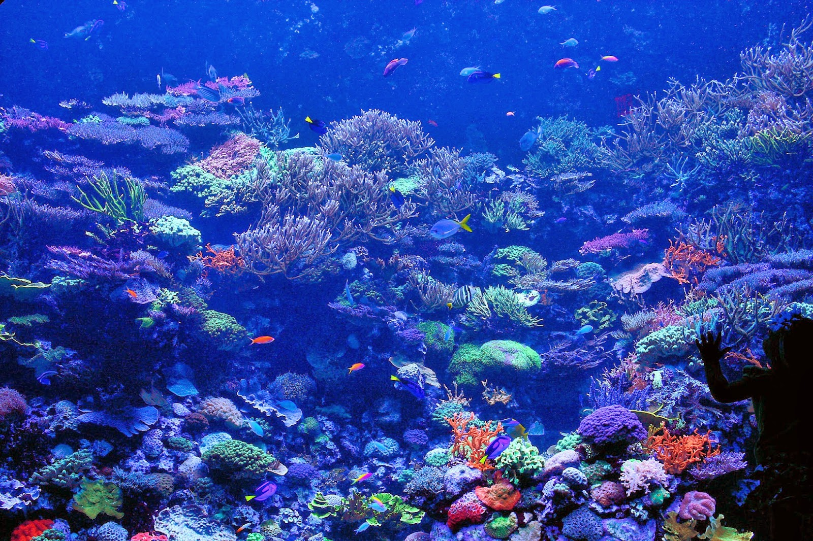 Desktop HD Wallpapers Downloads Coral Reef HD Wallpapers 1600x1066