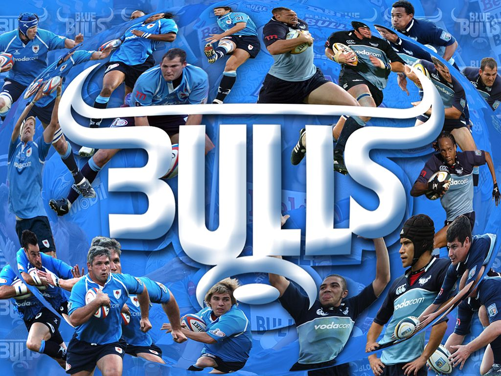 Blue Bulls Wallpaper Images Pictures   Becuo 1024x768